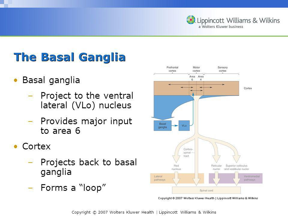 Copyright © 2007 Wolters Kluwer Health | Lippincott Williams & Wilkins The Basal Ganglia Basal ganglia –Project to the ventral lateral (VLo) nucleus –Provides major input to area 6 Cortex –Projects back to basal ganglia –Forms a loop