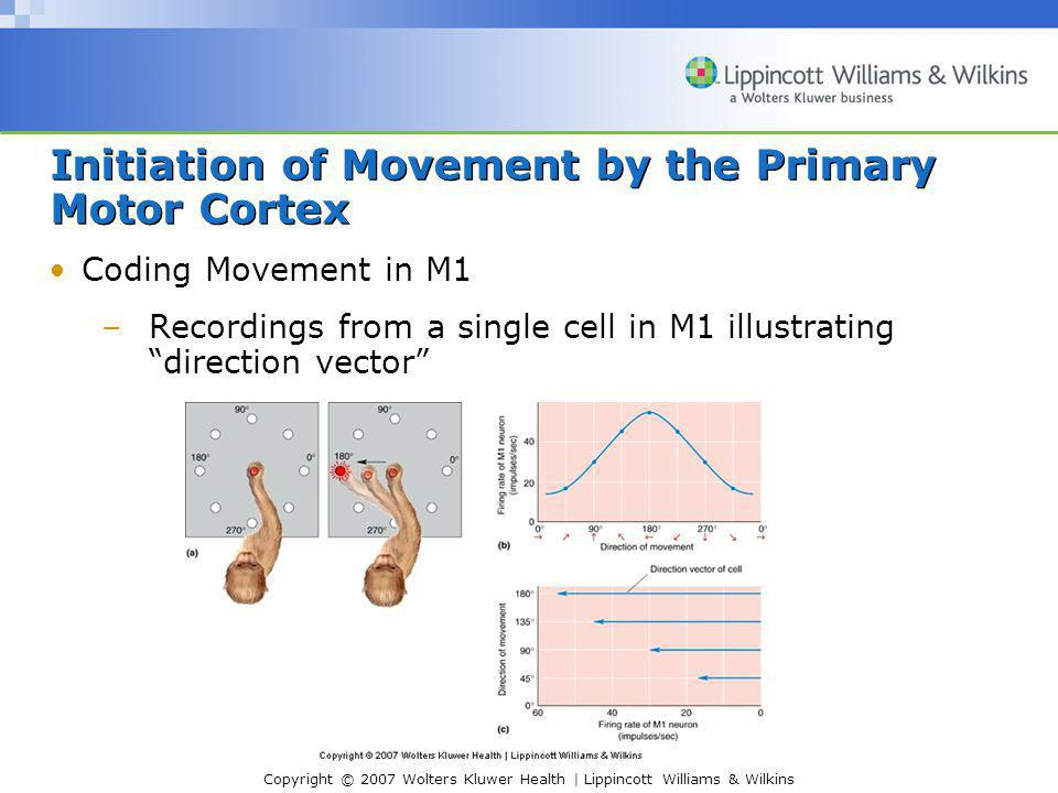 Copyright © 2007 Wolters Kluwer Health | Lippincott Williams & Wilkins Initiation of Movement by the Primary Motor Cortex Coding Movement in M1 –Recordings from a single cell in M1 illustrating direction vector