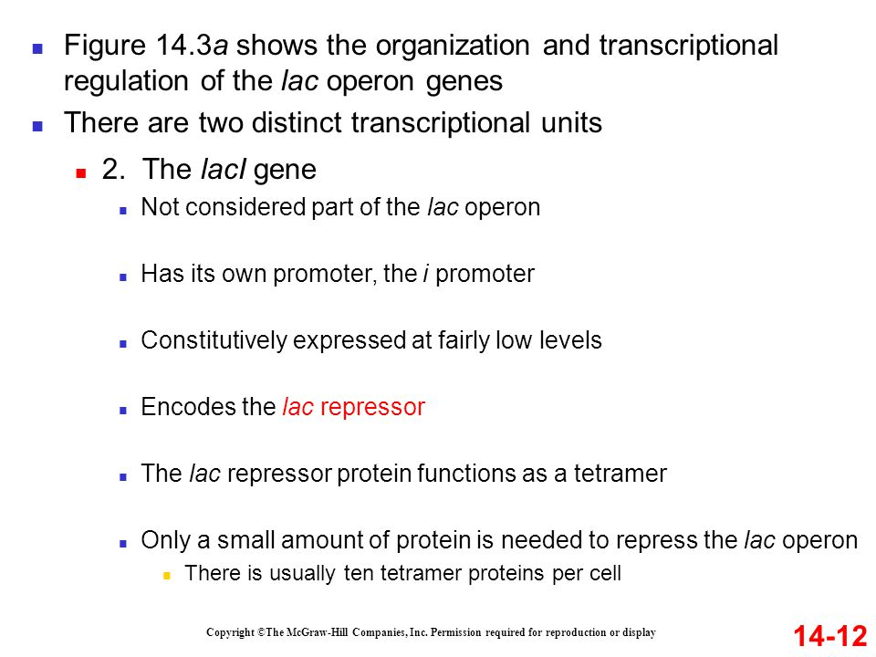 14-12 Figure 14.3a shows the organization and transcriptional regulation of the lac operon genes There are two distinct transcriptional units Copyrigh