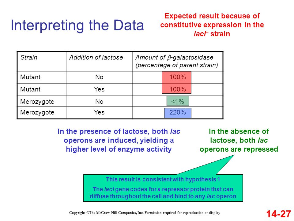 Interpreting the Data 14-27 Copyright ©The McGraw-Hill Companies, Inc. Permission required for reproduction or display StrainAddition of lactose Amoun