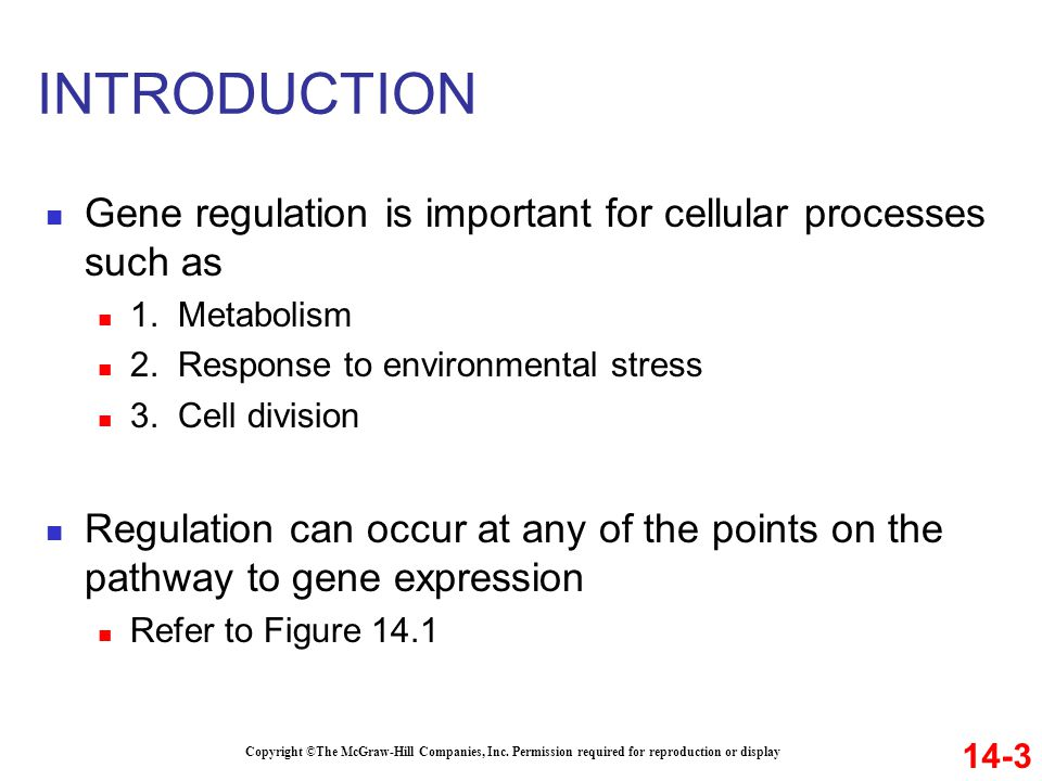 INTRODUCTION Gene regulation is important for cellular processes such as 1. Metabolism 2. Response to environmental stress 3. Cell division Regulation