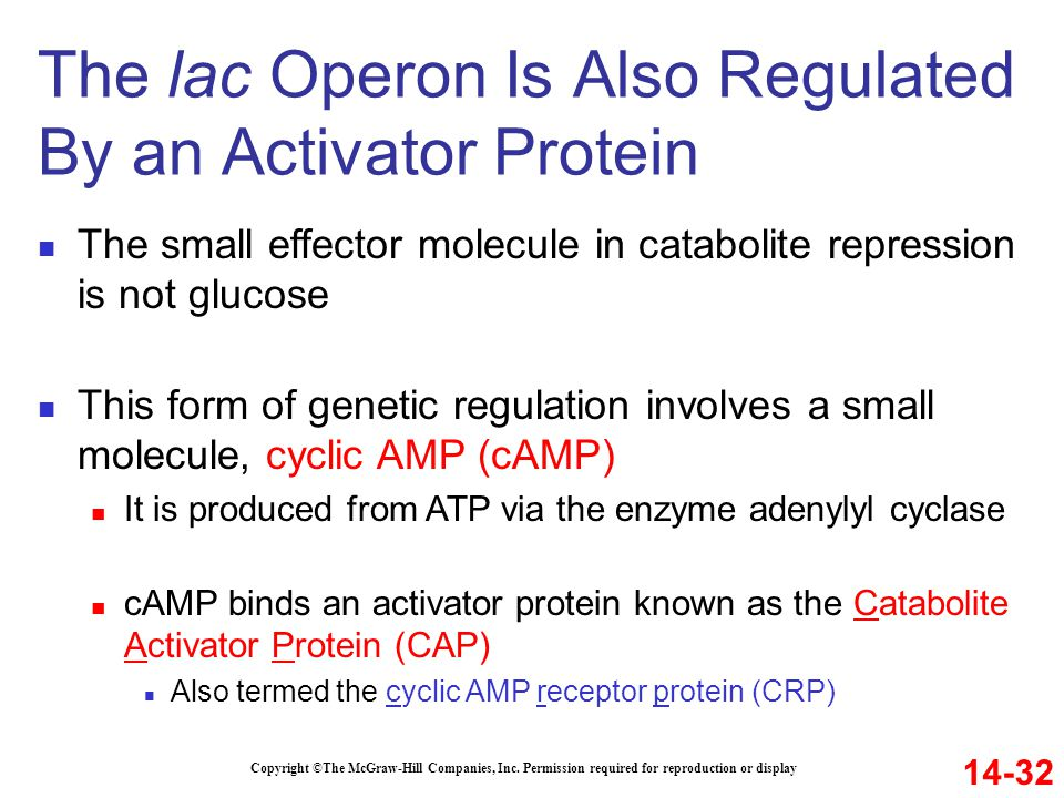 Copyright ©The McGraw-Hill Companies, Inc. Permission required for reproduction or display The small effector molecule in catabolite repression is not