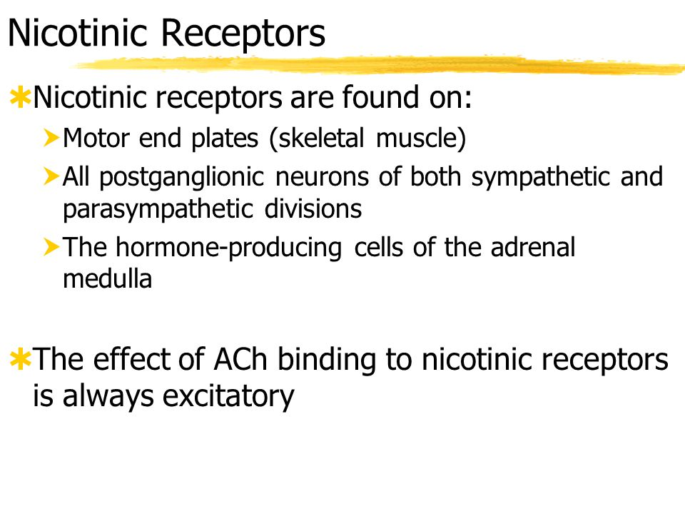 Muscarinic Receptors  Muscarinic receptors occur on all effector cells stimulated by parasympathetic cholinergic fibers and by those few effectors stimulated by sympathetic cholinergic fibers  The effect of ACh binding at muscarinic receptors:  Can be either inhibitory or excitatory  Depends on the receptor type of the target organ