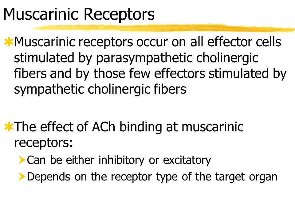 Adrenergic Receptors  The two fundamental types of adrenergic receptors are alpha and beta  Each type has subclasses: (  1,  2,  1,  2,  3 )  Effects of NE binding to:   receptors is generally excitatory to effectors   receptors is generally inhibitory to effectors  A clinically important exception – NE binding to  receptors in the heart is excitatory