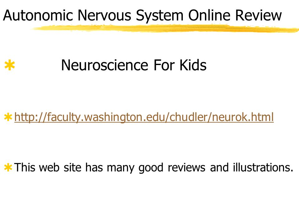 Autonomic Nervous System Controls  Different regions of the CNS have responsibility for different functions.