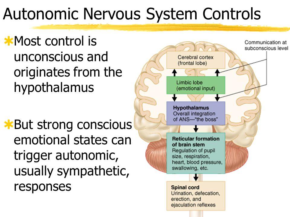Autonomic Nervous System Actions  See Table 14.4 (pg.