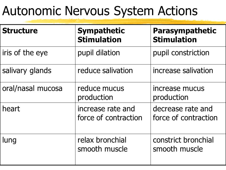 Autonomic Nervous System Actions StructureSympathetic Stimulation Parasympathetic Stimulation stomachreduce peristalsis; decrease gastric secretions increase peristalsis; increase gastric secretions small intestinereduce peristalsis; decrease intestinal secretions increase peristalsis; increase intestinal secretions large intestinereduce peristalsis; decrease intestinal secretions increase peristalsis; increase intestinal secretions liverincrease conversion of glycogen to glucose; release glucose into bloodstream n/a