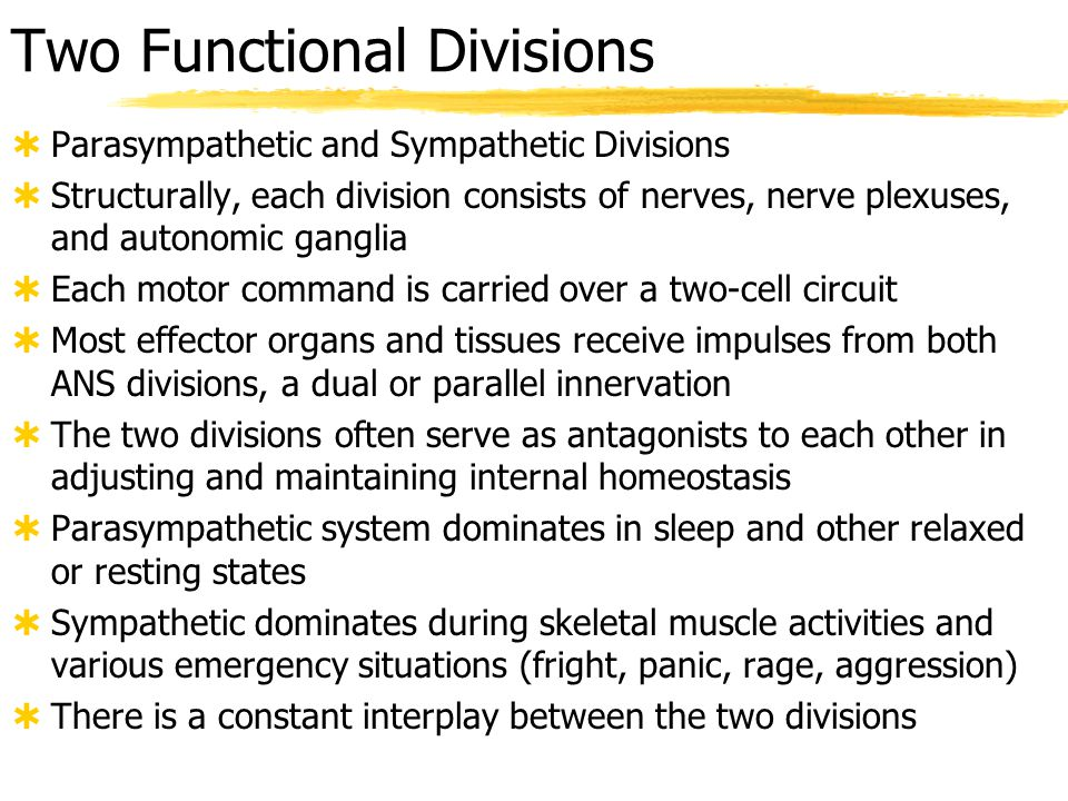 Comparison of Somatic to Autonomic  somatic: one motor neuron to skeletal muscle effectors  autonomic: two motor neurons to visceral effectors