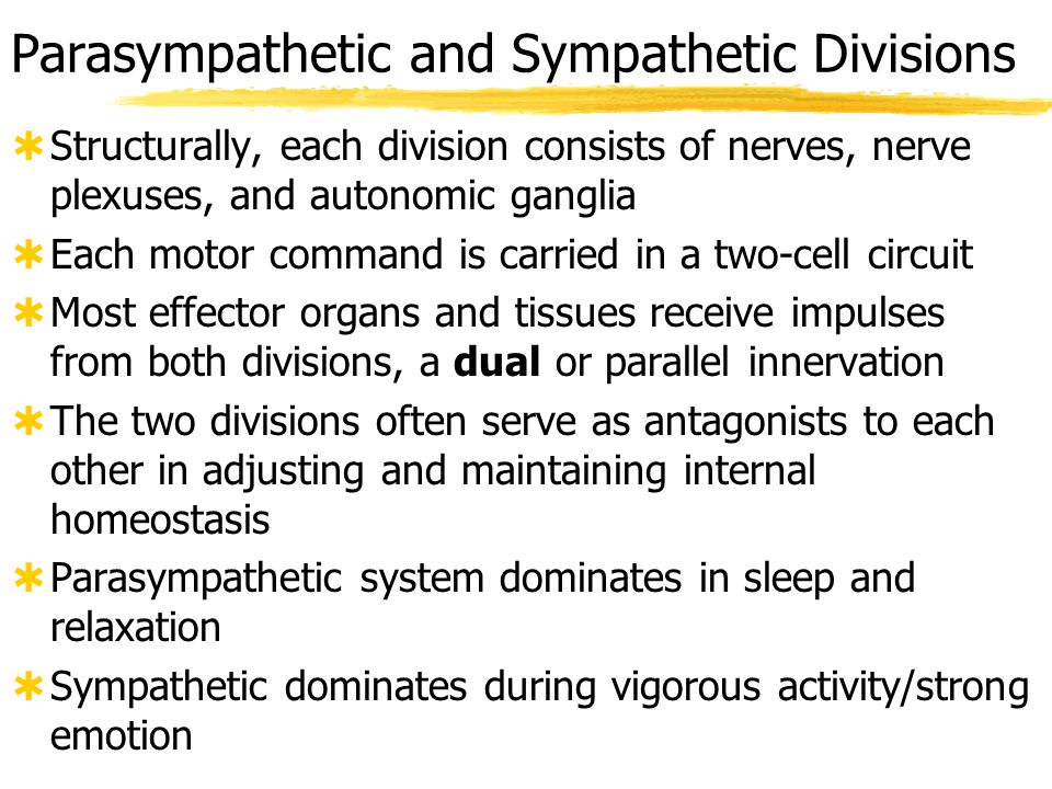 sympatheticparasympathetic preganglionic fiber short, myelinated, cholinergic long, myelinated, cholinergic postganglionic fiber long, unmyelinated, usually adrenergic short, unmyelinated, cholinergic gangliasympathetic chain (= paravertebral), collateral (= prevertebral), adrenal medullae terminal (on or in effector) (= intramural) dominant?fight or flight, E situations rest and relaxation, SLUD