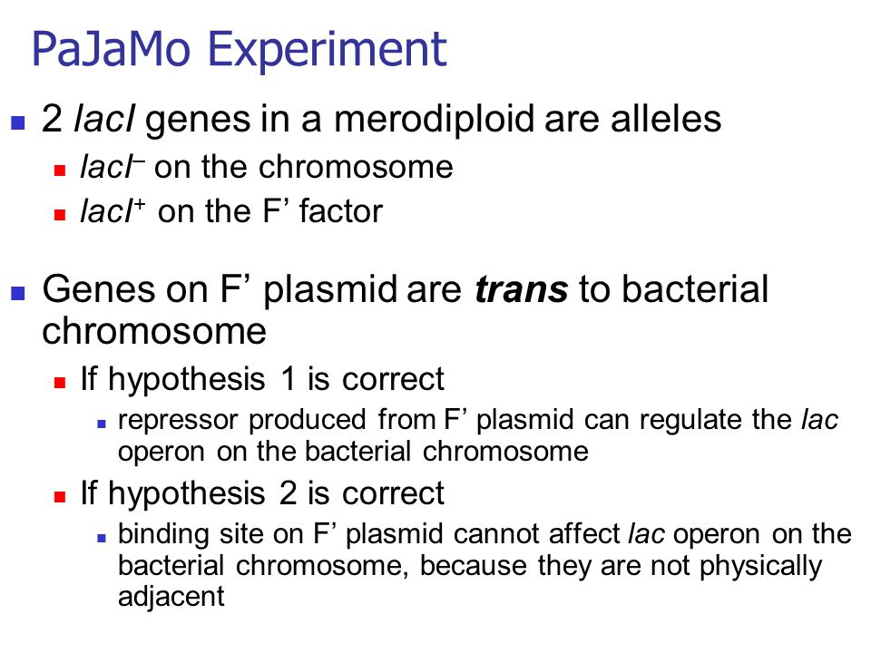 2 lacI genes in a merodiploid are alleles lacI – on the chromosome lacI + on the F' factor Genes on F' plasmid are trans to bacterial chromosome If hy