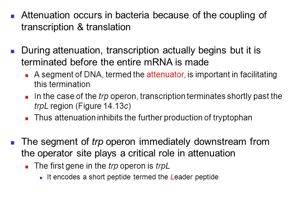 Attenuation occurs in bacteria because of the coupling of transcription & translation During attenuation, transcription actually begins but it is term