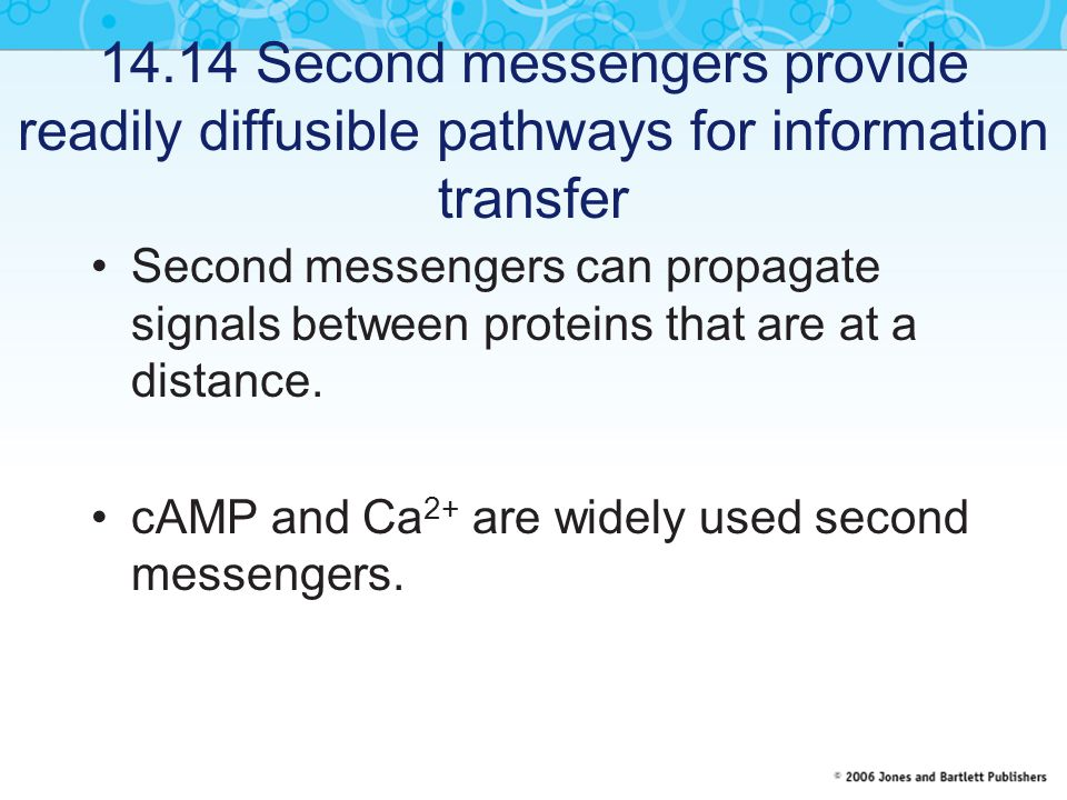 14.14 Second messengers provide readily diffusible pathways for information transfer Second messengers can propagate signals between proteins that are at a distance.