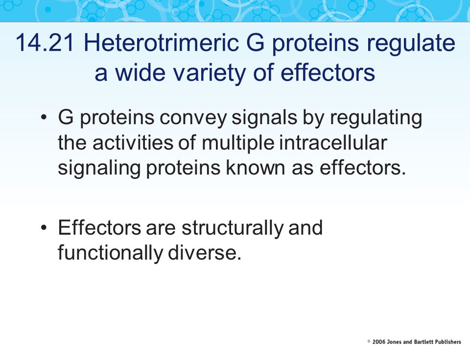 14.21 Heterotrimeric G proteins regulate a wide variety of effectors G proteins convey signals by regulating the activities of multiple intracellular signaling proteins known as effectors.