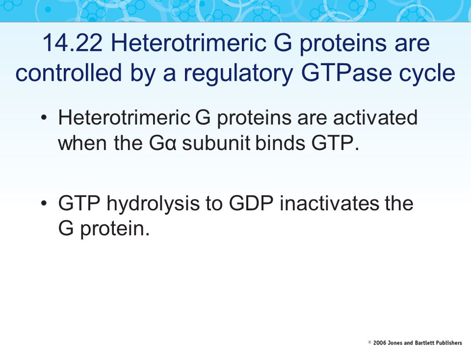14.22 Heterotrimeric G proteins are controlled by a regulatory GTPase cycle Heterotrimeric G proteins are activated when the Gα  subunit binds GTP.