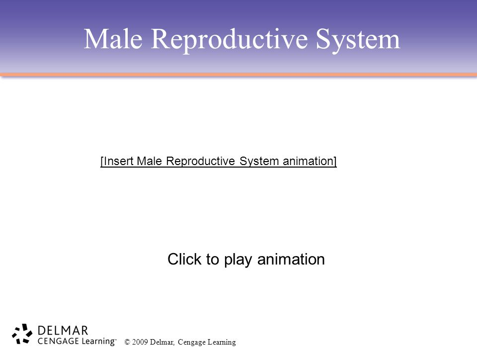 © 2009 Delmar, Cengage Learning Male Reproductive System Click to play animation [Insert Male Reproductive System animation]