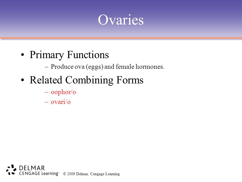 © 2009 Delmar, Cengage Learning Ovaries Primary Functions –Produce ova (eggs) and female hormones. Related Combining Forms –oophor/o –ovari/o