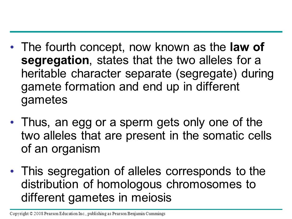 The fourth concept, now known as the law of segregation, states that the two alleles for a heritable character separate (segregate) during gamete form