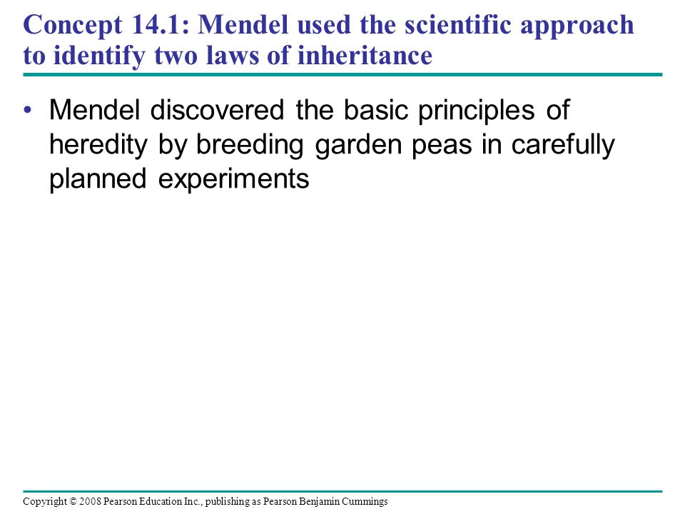 Concept 14.1: Mendel used the scientific approach to identify two laws of inheritance Mendel discovered the basic principles of heredity by breeding g