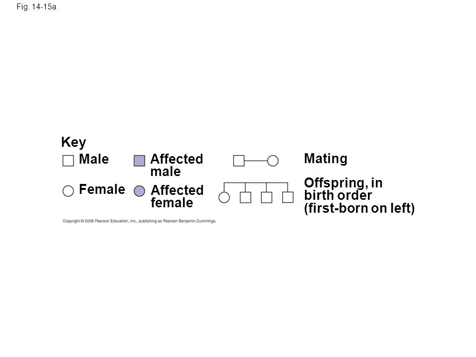 Fig. 14-15a Key Male Female Affected male Affected female Mating Offspring, in birth order (first-born on left)