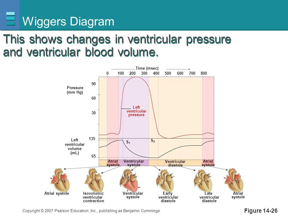 Copyright © 2007 Pearson Education, Inc., publishing as Benjamin Cummings Figure 14-26 Wiggers Diagram Pressure (mm Hg) Left ventricular volume (mL) A