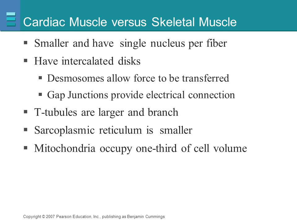 Copyright © 2007 Pearson Education, Inc., publishing as Benjamin Cummings Cardiac Muscle versus Skeletal Muscle  Smaller and have single nucleus per