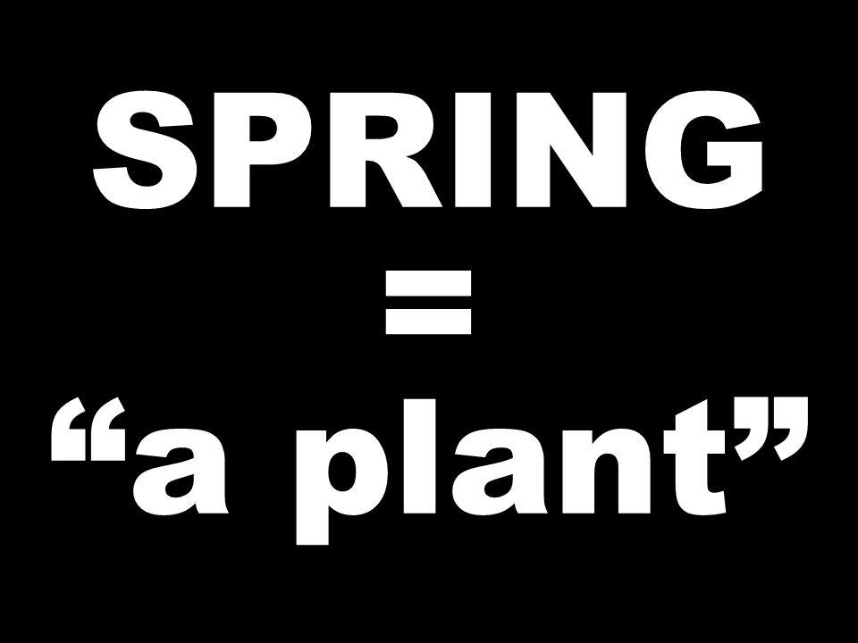 SPRING = a plant