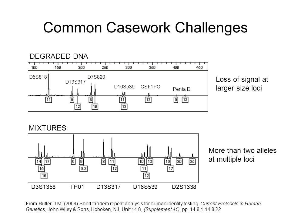 Common Casework Challenges D3S1358TH01D13S317D16S539D2S1338 MIXTURES DEGRADED DNA D5S818 D13S317 D7S820 D16S539CSF1PO Penta D From Butler, J.M.