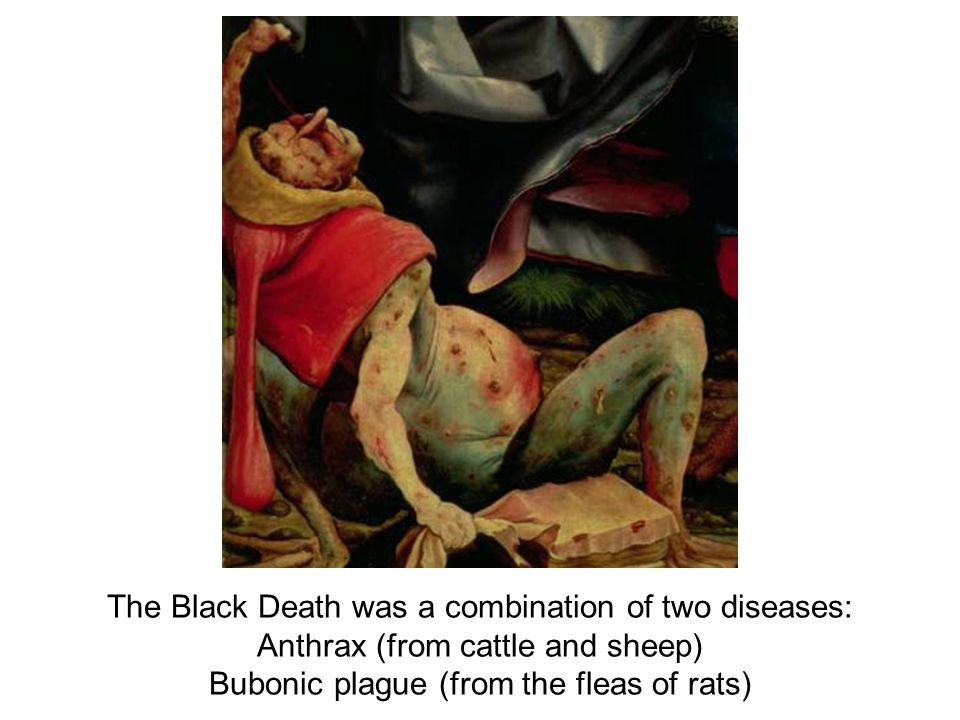 The Black Death was a combination of two diseases: Anthrax (from cattle and sheep) Bubonic plague (from the fleas of rats)