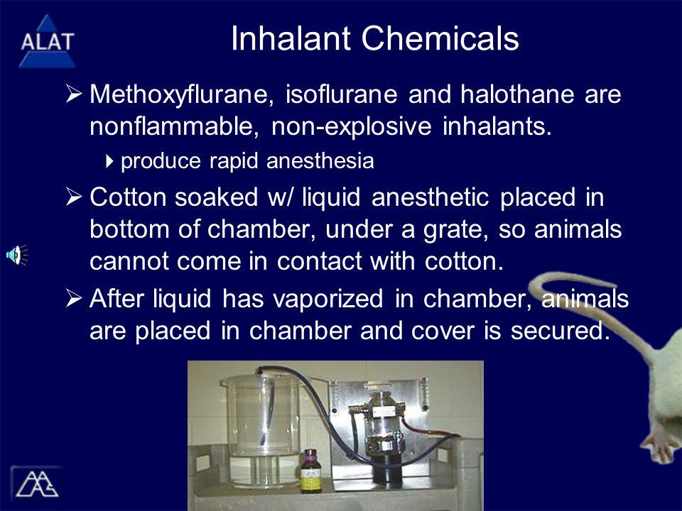 Inhalant Chemicals  Methoxyflurane, isoflurane and halothane are nonflammable, non-explosive inhalants.  produce rapid anesthesia  Cotton soaked w/