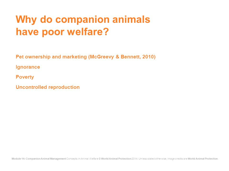 Module 14: Companion Animal Management Concepts in Animal Welfare © World Animal Protection 2014.