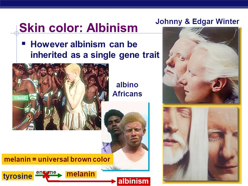 AP Biology Polygenic inheritance  Some phenotypes determined by additive effects of 2 or more genes on a single character  phenotypes on a continuum  human traits  skin color  height  weight  eye color  intelligence  behaviors