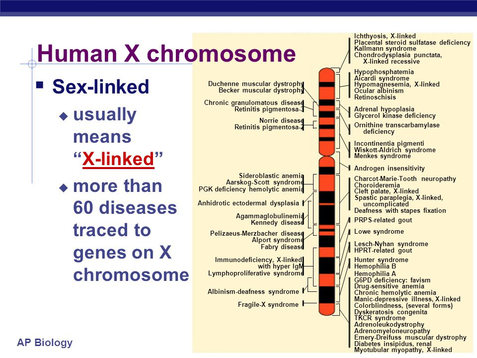 AP Biology Genes on sex chromosomes  Y chromosome  few genes other than SRY  sex-determining region  master regulator for maleness  turns on genes for production of male hormones  many effects = pleiotropy.