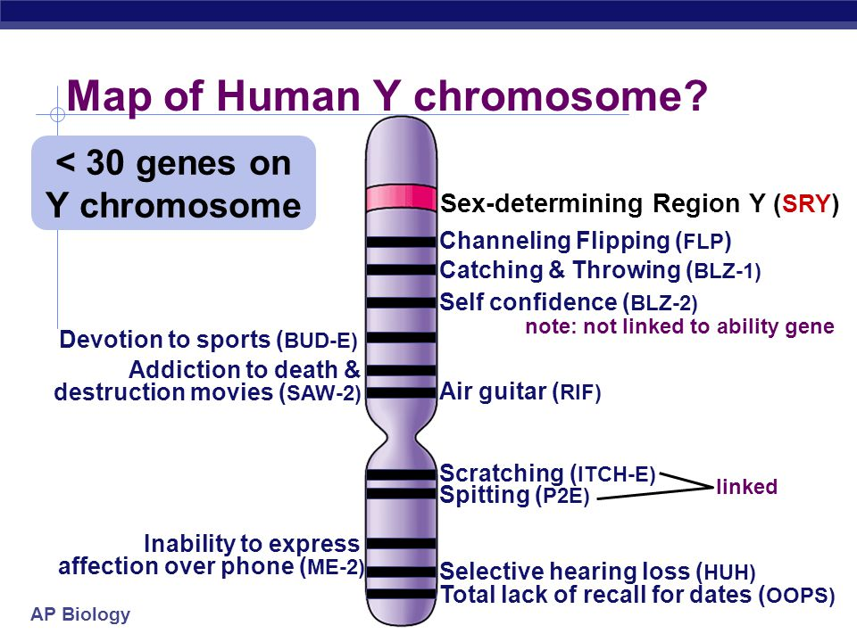 AP Biology  Sex-linked  usually means X-linked  more than 60 diseases traced to genes on X chromosome Human X chromosome