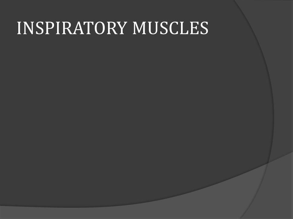 INSPIRATORY MUSCLES