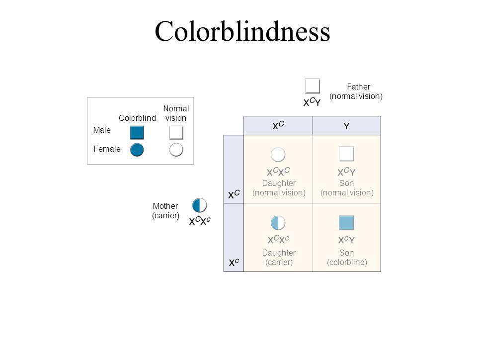 Father (normal vision) Colorblind Normal vision Mother (carrier) Daughter (normal vision) Son (normal vision) Daughter (carrier) Son (colorblind) Sect