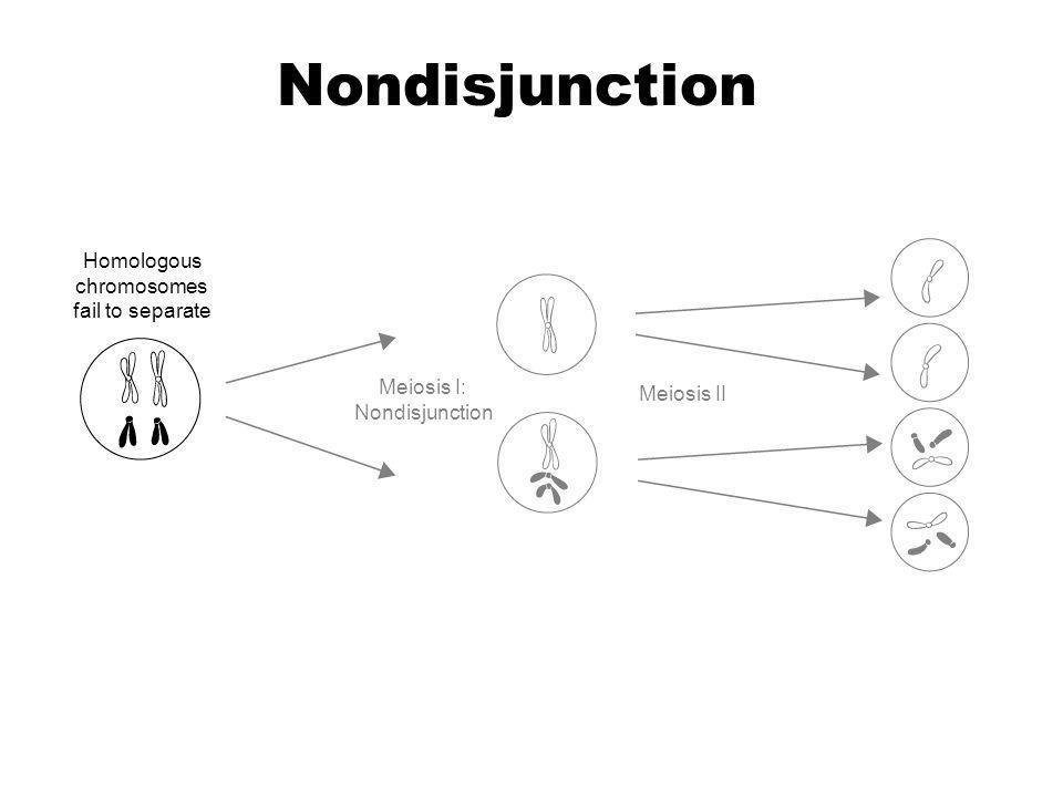 Homologous chromosomes fail to separate Meiosis I: Nondisjunction Meiosis II Section 14-2 Nondisjunction Go to Section: