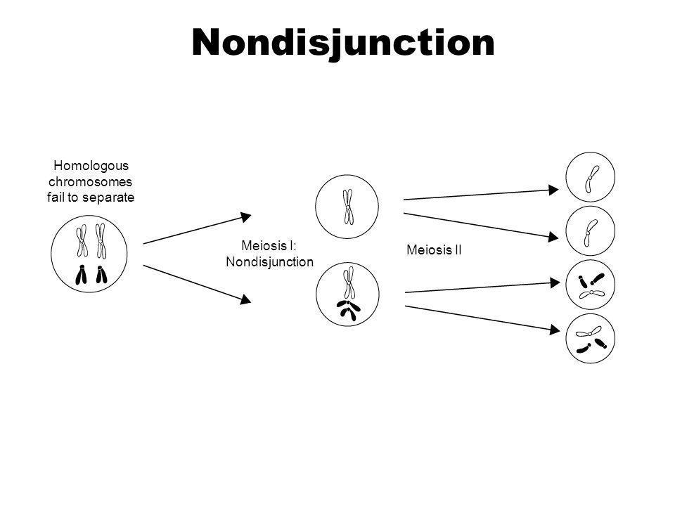 Homologous chromosomes fail to separate Meiosis I: Nondisjunction Meiosis II Section 14-2 Go to Section: Nondisjunction