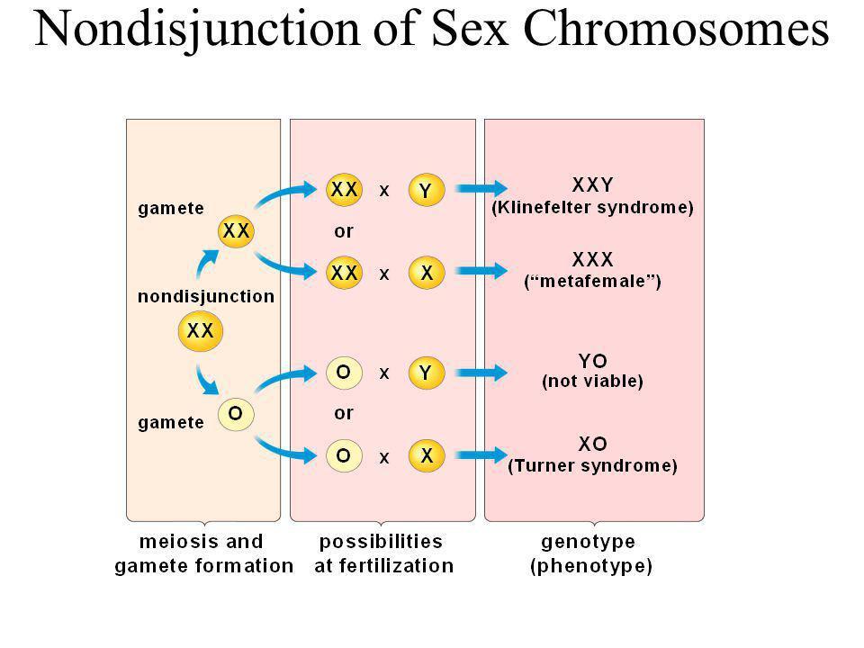 Nondisjunction of Sex Chromosomes