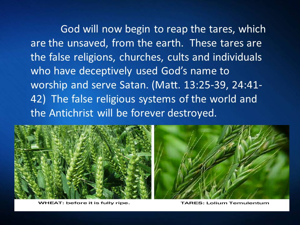 God will now begin to reap the tares, which are the unsaved, from the earth.