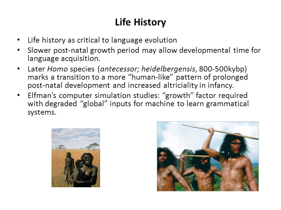 Life History Life history as critical to language evolution Slower post-natal growth period may allow developmental time for language acquisition. Lat