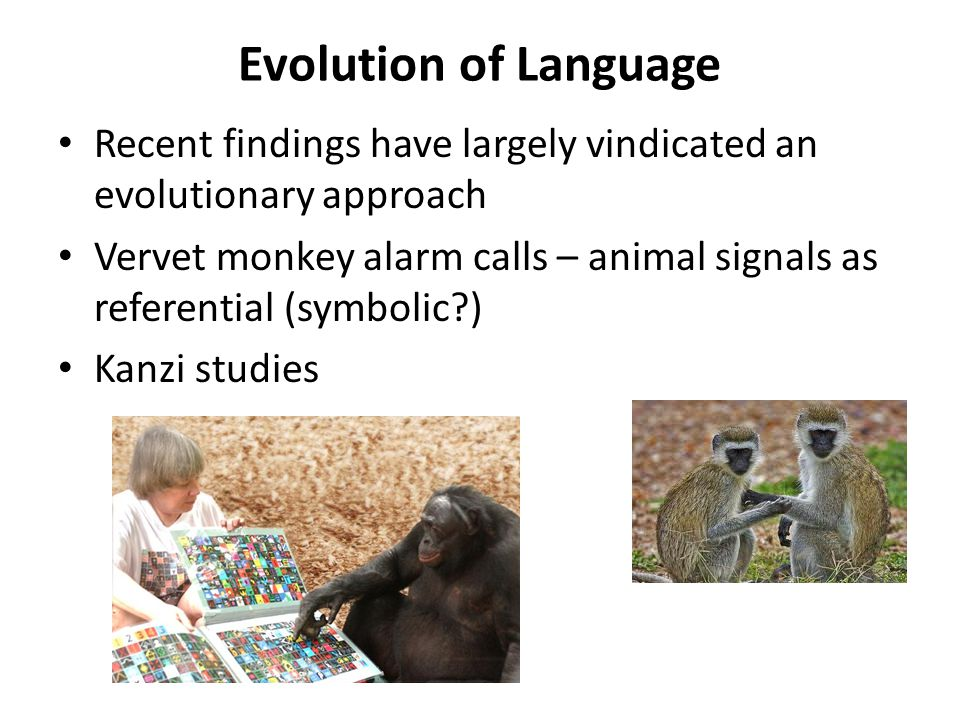 Evolution of Language Recent findings have largely vindicated an evolutionary approach Vervet monkey alarm calls – animal signals as referential (symb