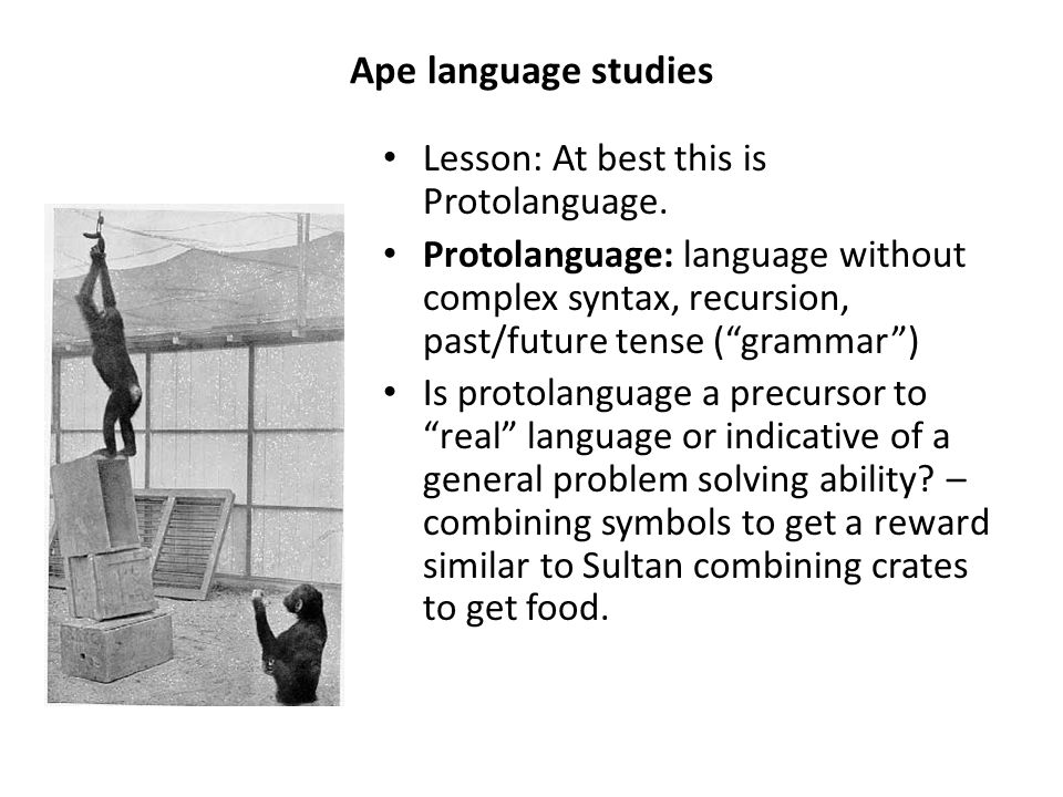 "Ape language studies Lesson: At best this is Protolanguage. Protolanguage: language without complex syntax, recursion, past/future tense (""grammar"") I"