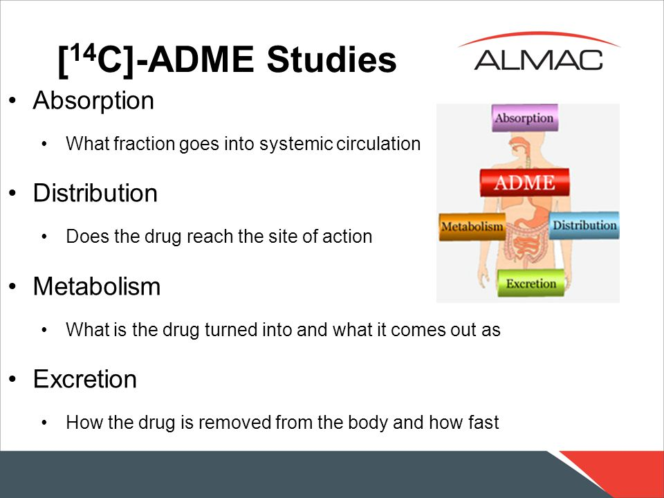 [ 14 C]-ADME Studies Absorption What fraction goes into systemic circulation Distribution Does the drug reach the site of action Metabolism What is the drug turned into and what it comes out as Excretion How the drug is removed from the body and how fast