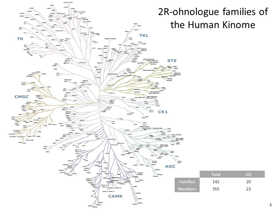 8 2R-ohnologue families of the Human Kinome TotalGD Families14220 Members35523