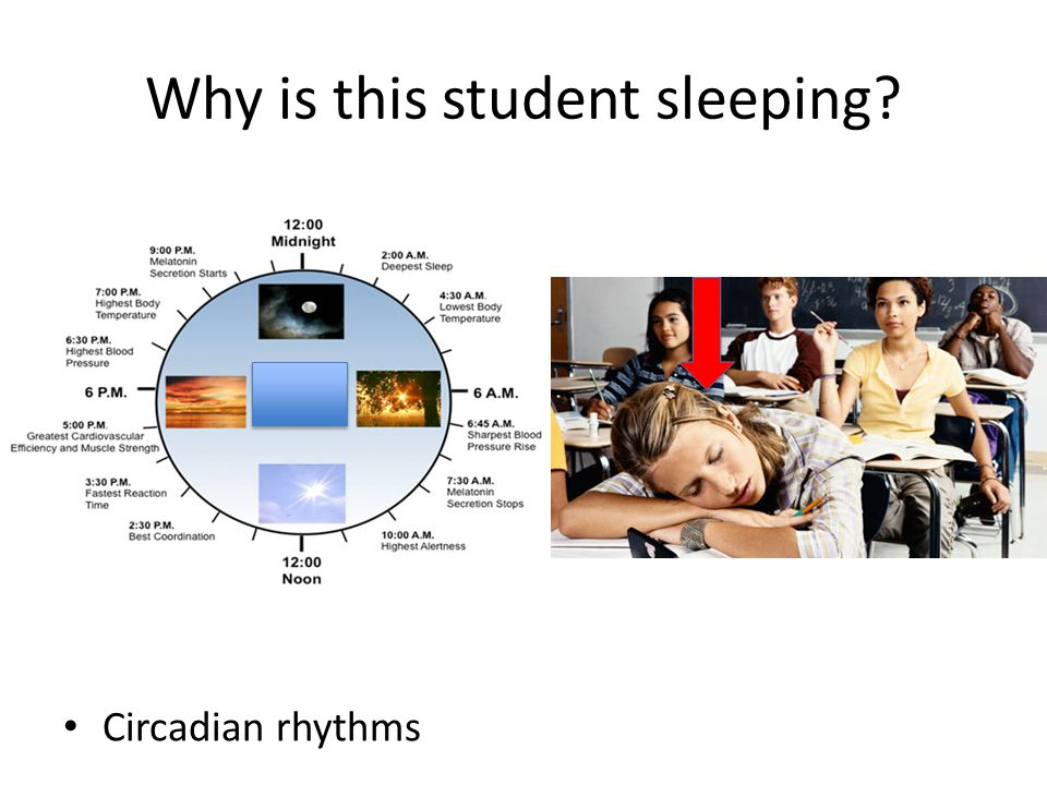Why is this student sleeping? Circadian rhythms