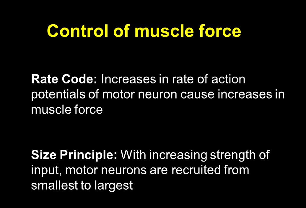 Control of muscle force Rate Code: Increases in rate of action potentials of motor neuron cause increases in muscle force Size Principle: With increas