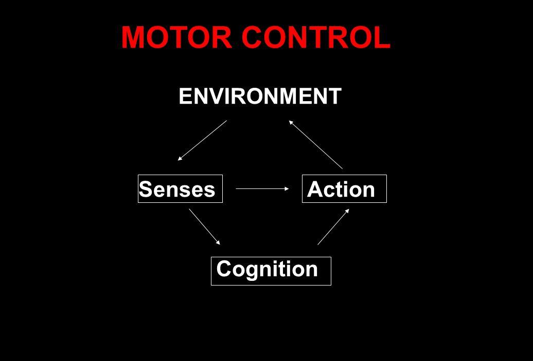 Cognition Action ENVIRONMENT Senses MOTOR CONTROL