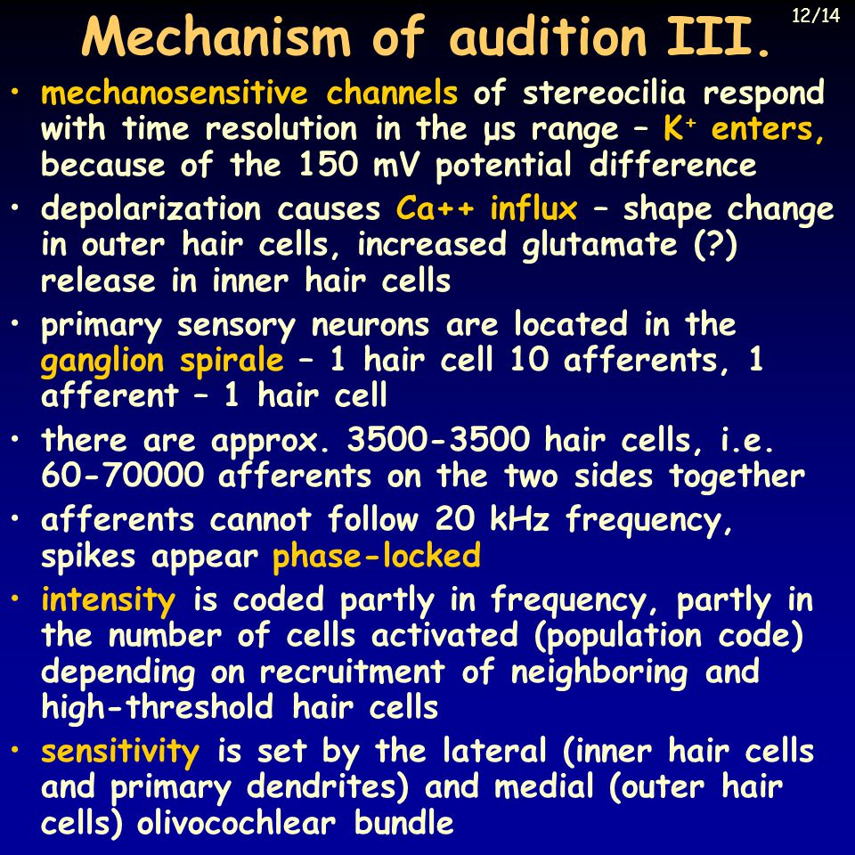 Mechanism of audition III.