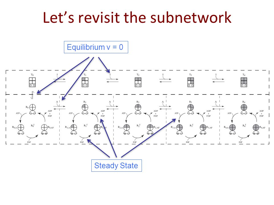 Let's revisit the subnetwork Equilibrium v = 0 Steady State