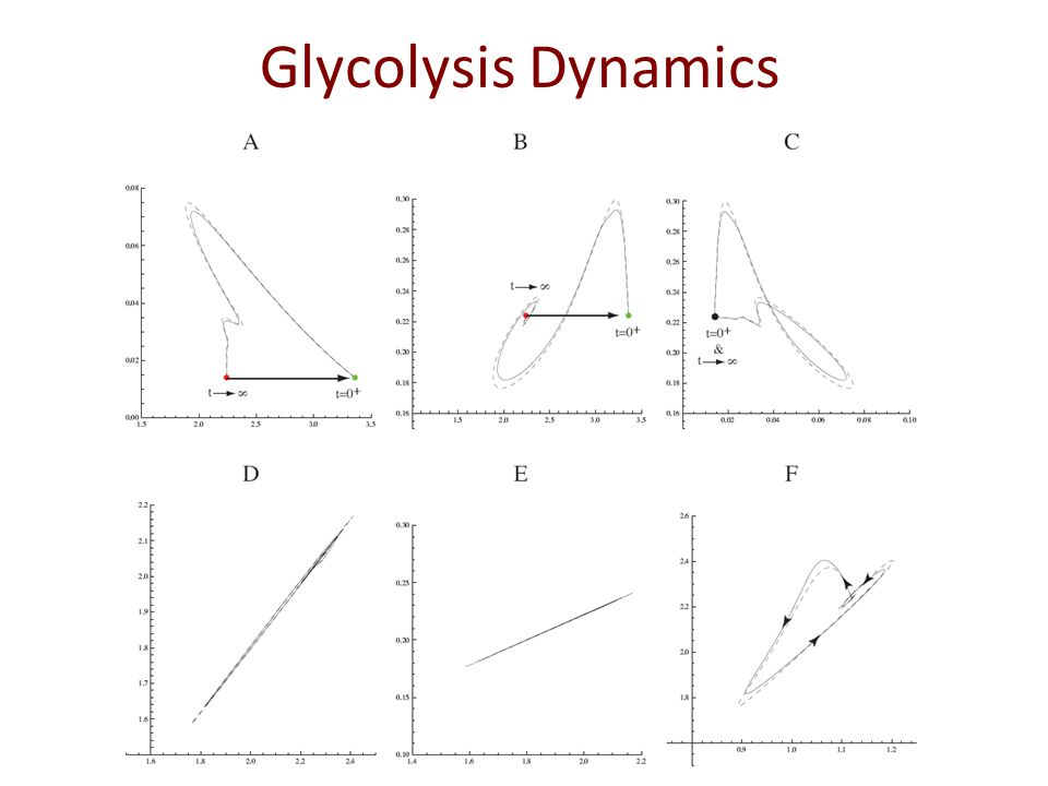 Glycolysis Dynamics